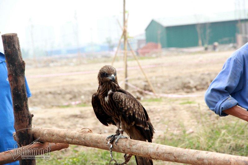 Giá trị chim phụ thuộc vào hình dáng, kích thước và kỹ năng săn mồi của từng con. (Ảnh Vietnamnet)