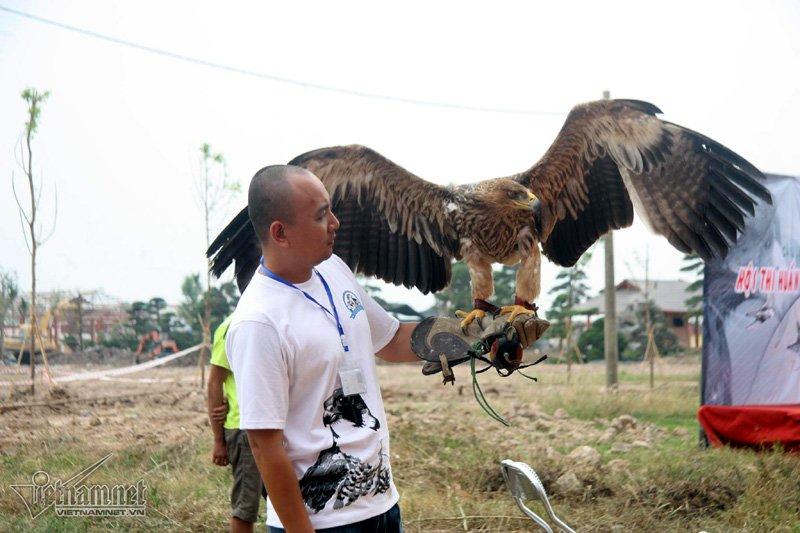Falconner (người huấn luyện chim) dành nhiều tâm huyết cho chim cưng của mình trước cuộc thi. (Ảnh Vietnamnet)