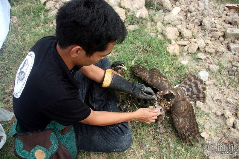 """Những nhà huấn luyện chim cho biết nếu thả về với tự nhiên, những chú chim này sẽ biết cách tự lập để tồn tại, thậm chí còn """"điên cuồng"""" hơn các con chim ở ngoài tự nhiên. (Ảnh Vietnamnet)"""