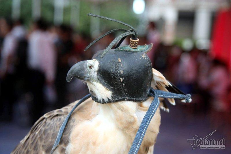Những con chim này sẽ được bịt mắt tránh hoảng loạn mỗi khi bị kích động, hoặc kiềm chế bản năng hoang dã có thể chim lớn ăn chim bé. (Ảnh Vietnamnet)