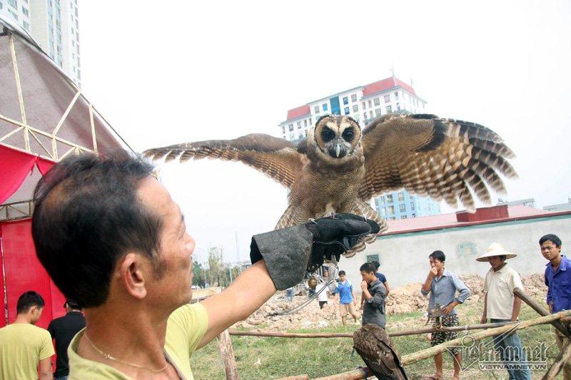 Sở hữu một con chim săn mồi là niềm tự hào của người huấn luyện. Sở hữu một con chim săn mồi là niềm tự hào của người huấn luyện. (Ảnh Vietnamnet)