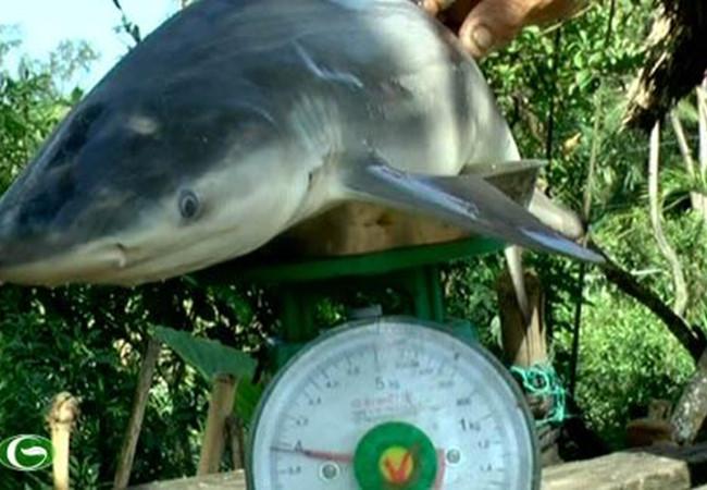 Con cá mập 4 kg do lão nông bắt được. (Ảnh: A.X)