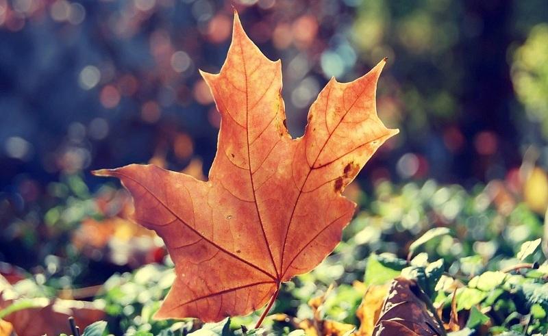 Cuộc sống vui vẻ mới là tài sản quan trọng nhất của đời người. (Ảnh: Internet)