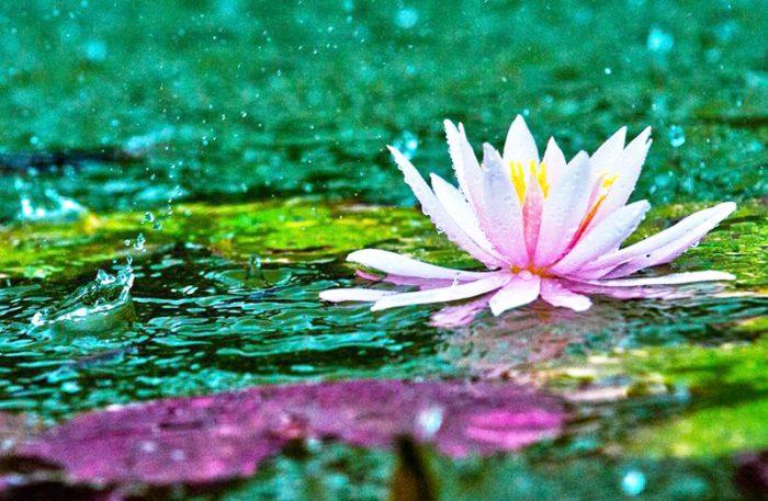 Cuộc đời tuy không dễ dàng nhưng vẫn luôn đáng sống. Mỗi khó khăn xảy ra không phải để chúng ta buồn rầu và than thở. (Ảnh: Internet)