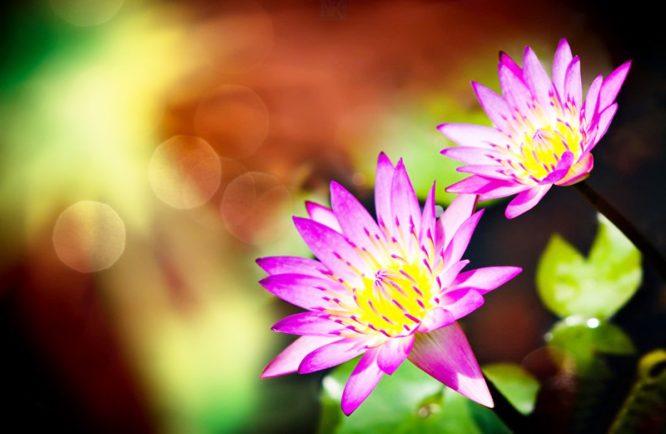 Một người càng dễ nóng giận, nội tâm của họ càng tự tư.2