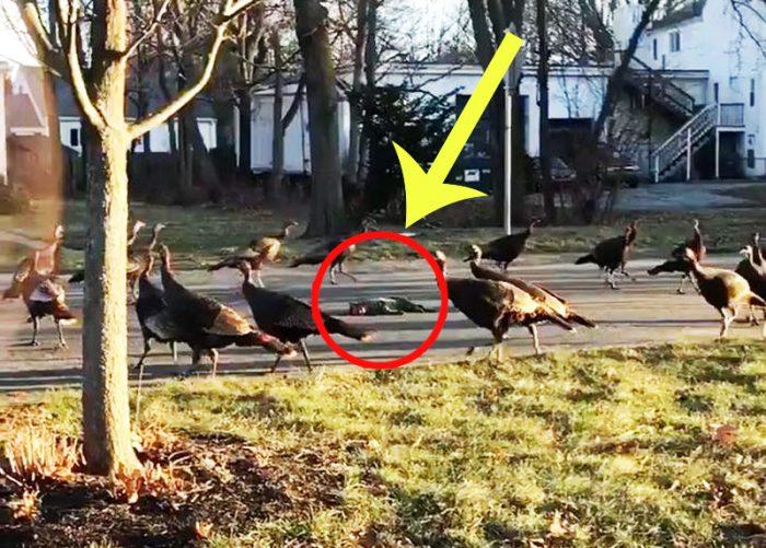 Cảnh tượng đàn gà đi vòng quanh con mèo chết khiến cư dân mạng tò mò. (Ảnh chụp từ clip)