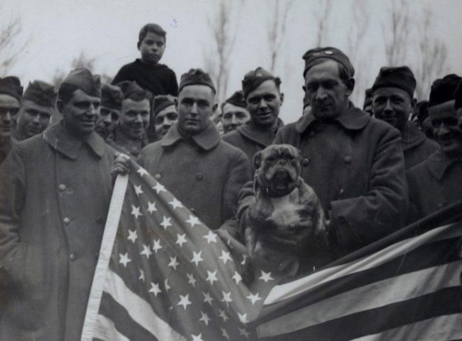 John Bull, con chó trong lực lượng không quân Mỹ về nước sau khi tham chiến tại Anh.
