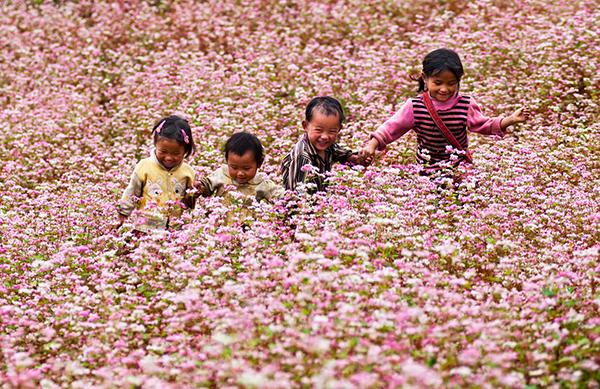 Bông hoa đẹp nhất con hái dành cho mẹ