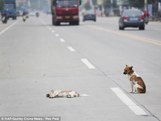 Chú chó đứng thẫn thờnhìn theo...