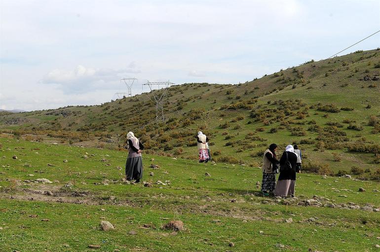 Cả trẻ em, phụ nữ đều tham gia tìm kiếm đá trời