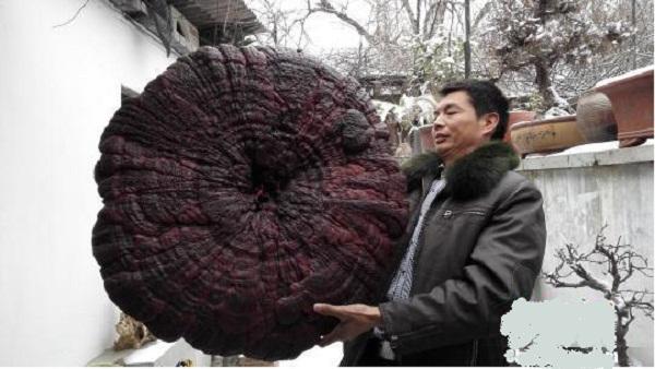 Một người thợ điêu khắc ở thành phố Lạc Dương quyết định mua lại nó.