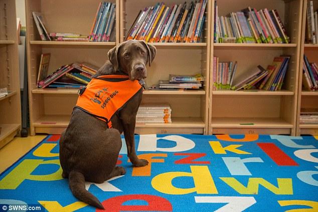 Việc chú chó Fernie có thể đọc chữ khiến nhiều chuyên gia cũng cảm thấy khó hiểu.