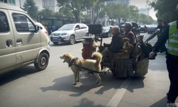 Mặc cho phố phường đông đúc, đôi vợ chồng già vẫn miệt mài dạo phố trên chiếc xe chó kéo của mình.