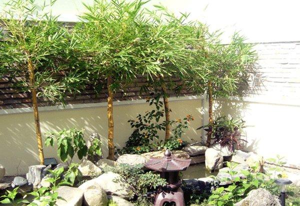 Tre là cây sẽ mang đến nhiều may mắn cho ngôi nhà của bạn, giúp công việc thuận lợi ăn nên làm ra. (Ảnh: Internet)