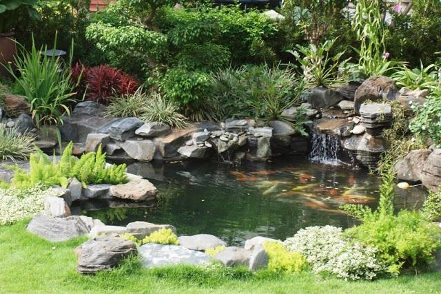 Hồ nước nên có diện tích ít nhất là 2m x 1m, sâu 0,8-1,2 m. (Ảnh: Internet)