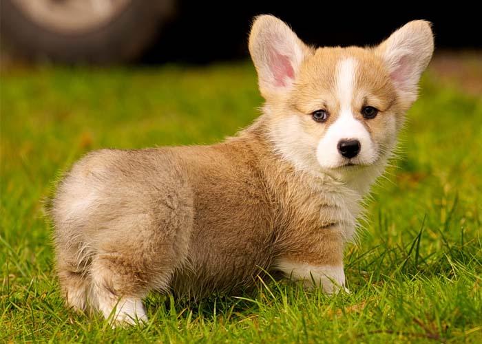 Mơ thấy dắt chó đi dạo ngụ ý quan hệ xã hội tốt, sắp gặp lại bạn bè cũ.