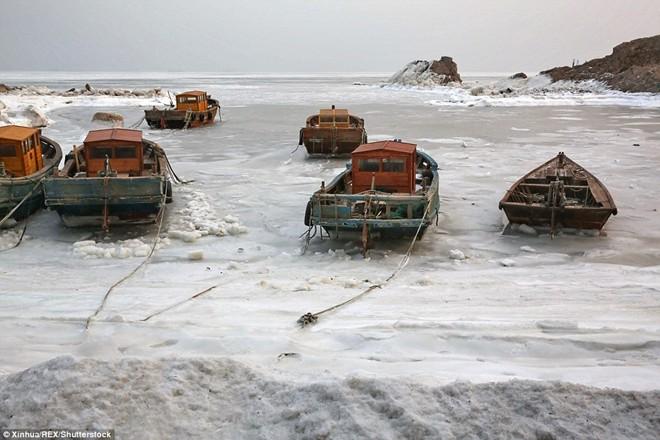 306E2C2E000005783410277Fishing_boats_were_frozen_by_sea_ice_in_Qinhuangdao_a_port_city_m71_1453390555070