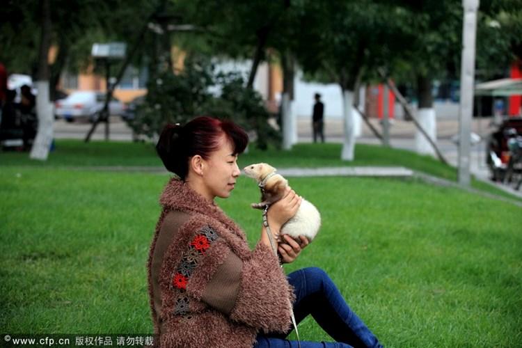 Chủ nhân và chồn cưng đang mũi chạm mũi trong một công viên ở Cát Lâm
