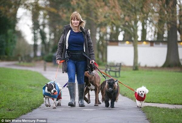 Hobo là chú dê duy nhất được đặc quyền đi dạo như chó