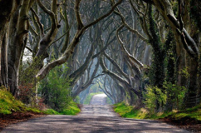 13 con đường đẹp như thơ khiến người ta mê đắm.9