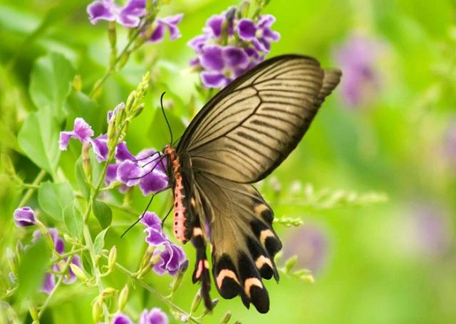 Giãy giụa chính là điều com bướm cần làm để trưởng thành. (Ảnh: Internet)