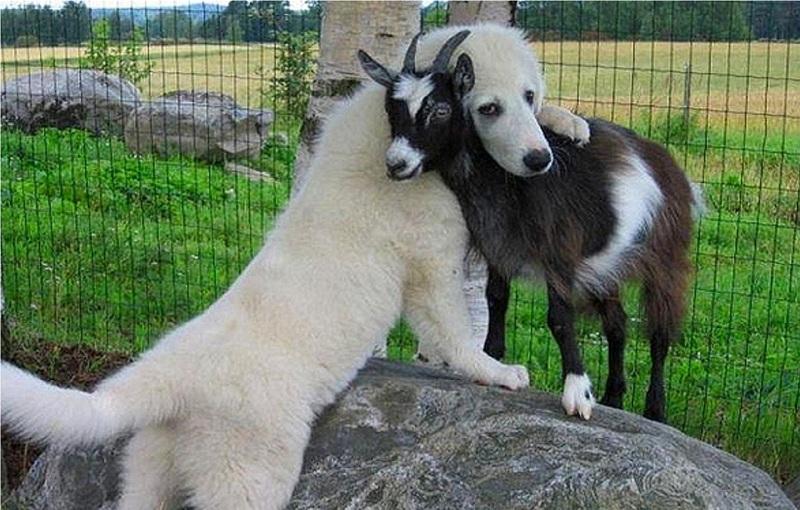 Bạn bè thực sự chính là đưa tay ra vào những lúc cần nhau nhất. (Ảnh: Internet)