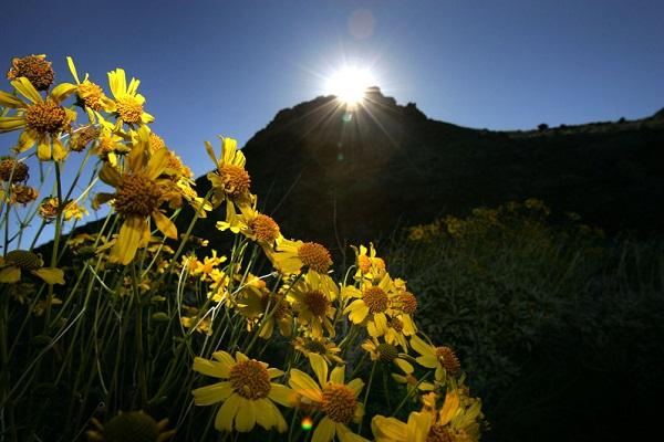 Những bông hoa đầy màu sắc đem lại sự sống cho khu vực.