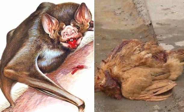 Sinh vật bí ẩn gây ra cái chết cho hàng trăn con gia cầm tại Trung Quốc.