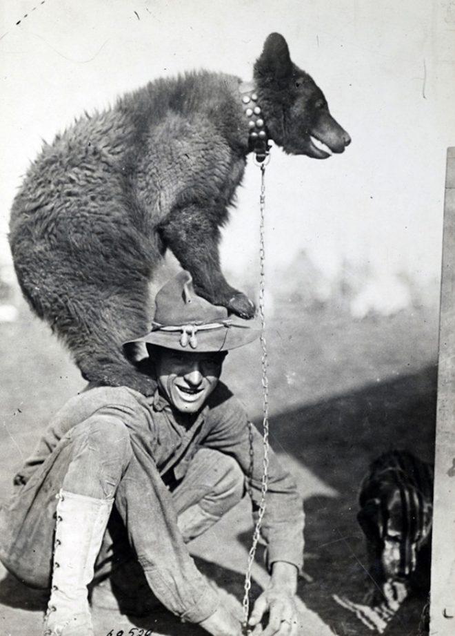 Những con vật nổi tiếng trong quân đội Mỹ Thế chiến I.3