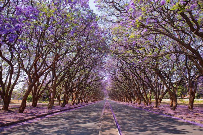 13 con đường đẹp như thơ khiến người ta mê đắm.6