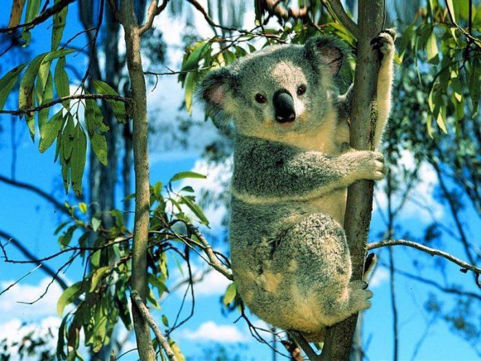 Những loài động vật có khả năng siêu phàm khó tin.9