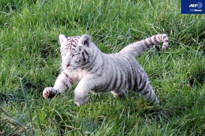 Thời thơ ấu đáng yêu của những động vật săn mồi.6