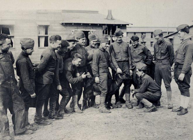 Những con vật nổi tiếng trong quân đội Mỹ Thế chiến I.7