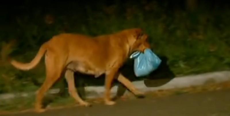 Ngày nào Lilica cũng băng qua nhiều kilomet đường dài để mang thức ăn về nhà (Ảnh: Youtube)