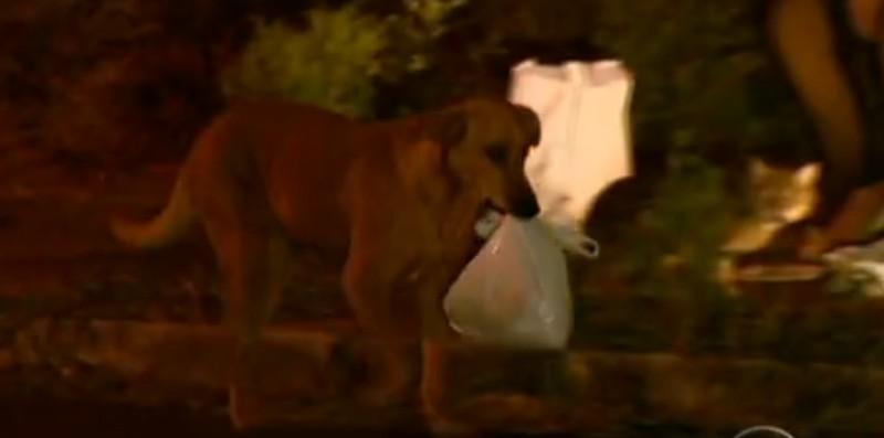 Trong nhiều năm qua, Lilica chưa bao giờ để các bạn mình phải đói bụng (Ảnh: Youtube)