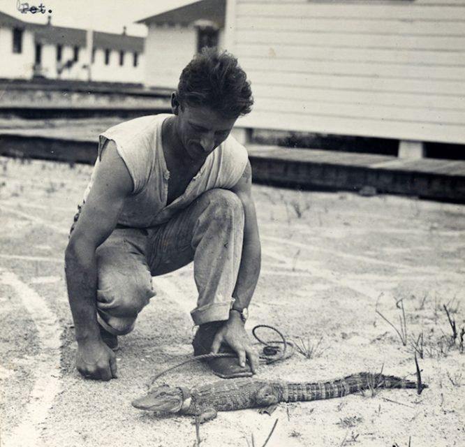 Những con vật nổi tiếng trong quân đội Mỹ Thế chiến I.9