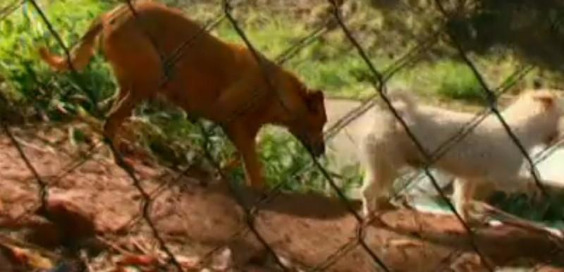 Bạn bè của Lilica không chỉ là những con chó khác trong xóm… (Ảnh: Youtube)
