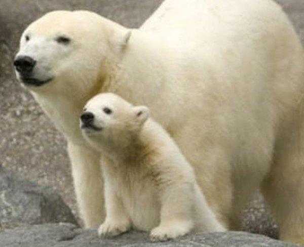 Thời thơ ấu đáng yêu của những động vật săn mồi.5