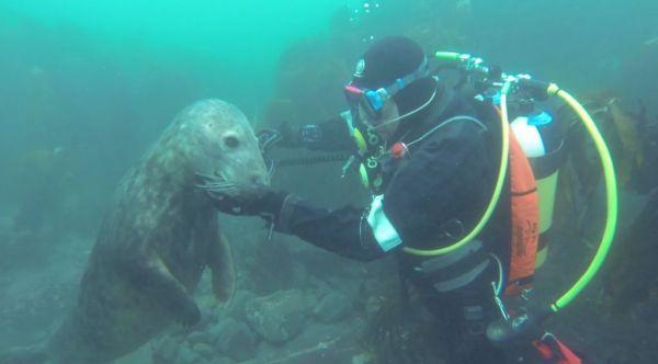 Distinction-between-Seals-and-Humans