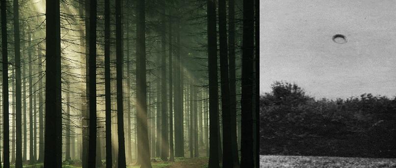Hoia-Baciu-forest - Copy