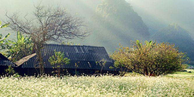 Những điểm chụp ảnh với cảnh đẹp như mơ ở miền Nam.8