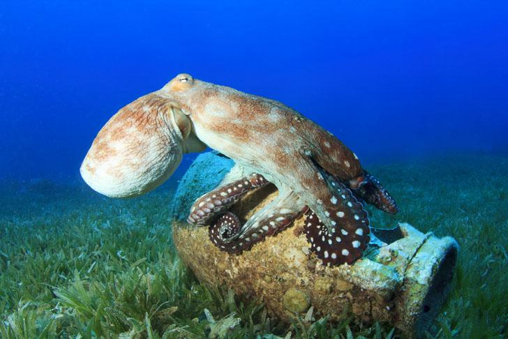 Octopus-on-old-jar