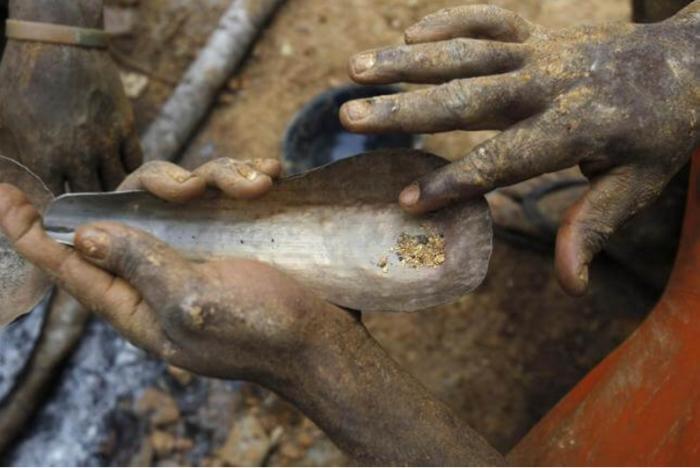 Nước tiểu bò Gir ở Ấn Độ chứa vàng thật và làm thuốc chữa bệnh.2