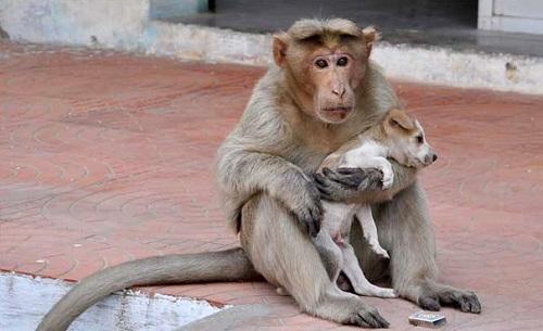 Khỉ mẹ đã cứu được chú chó khi nó bị bỏ rơi ngoài đường.