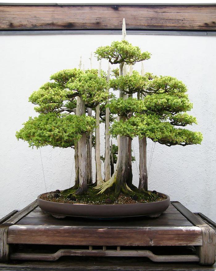 amazing-bonsai-trees-13-5710ed962c1f6__700