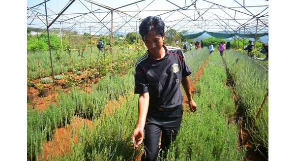 Anh Lê Tiến Thành tại vườn oải hương độc nhất vô nhị Đà Lạt.