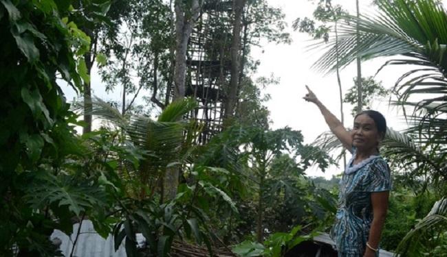 Cụ ông miền Tây chỉ thích ở trên… ngọn cây!3