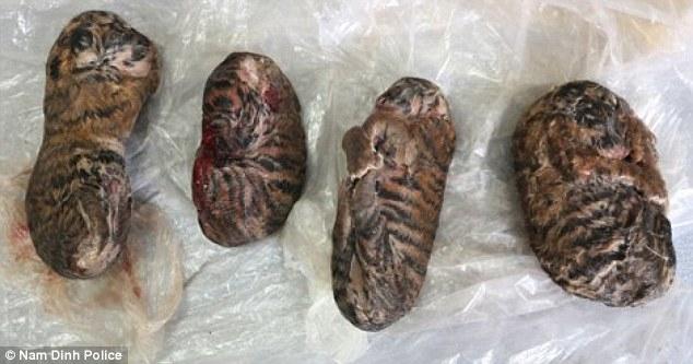 4 con hổ con bị đông lạnh để đem bán (ảnh: Cảnh sát Nam Định)
