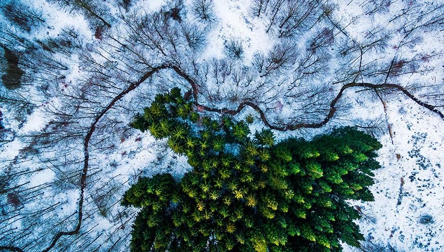 Giải nhất hạng mục Thiên nhiên hoang dã: Rừng Kalbyris, Đan Mạch.