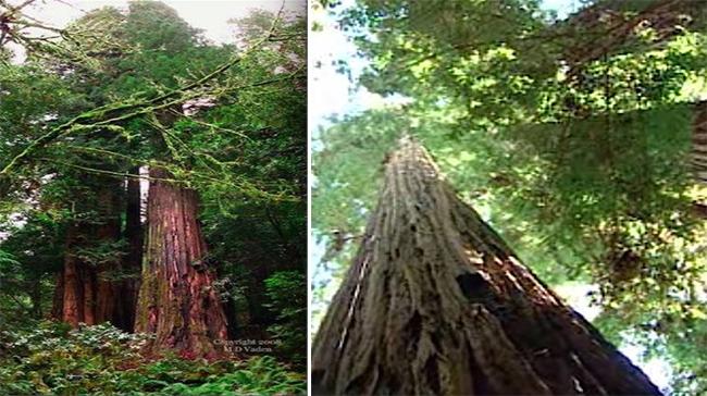 12 cây dị độc giữ kỷ lục đáng kinh ngạc trong thế giới thực vật - H1